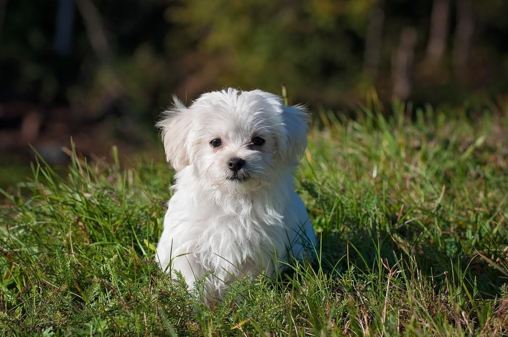 dog-pezibear_pixabay